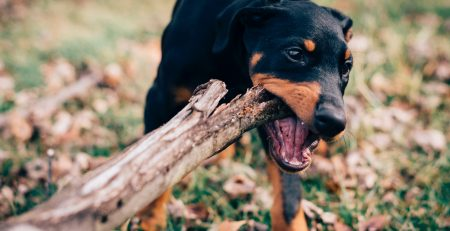 2.5 What is Dog Owner Liability in Arizona?