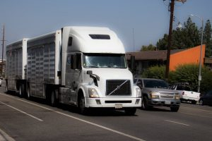 What Are Your Rights After Your Spouse is Killed in an Arizona 18-Wheeler Accident